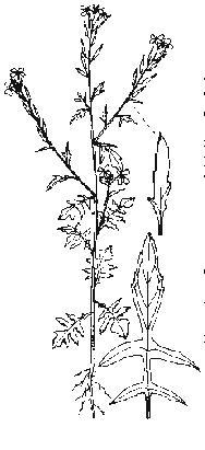 salatpflänzchen maschine suchen