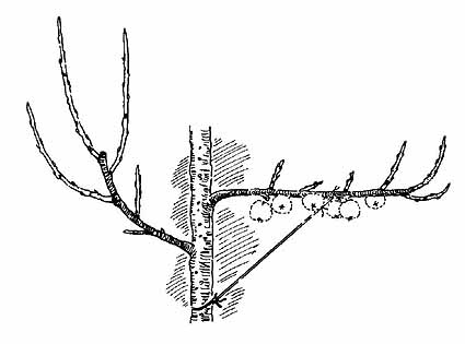 können obstbäume jetzt umgepflanzt werden