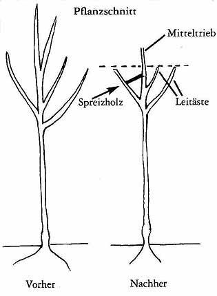 Favorit Pflanzung und Pflege von Obstbäumen RK15
