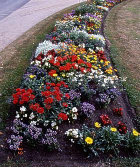 Gaetren in hessen und franken for Blumenrabatte gestalten